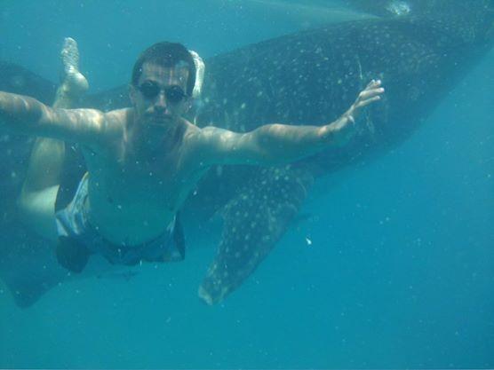 oslob cebu whalesharks